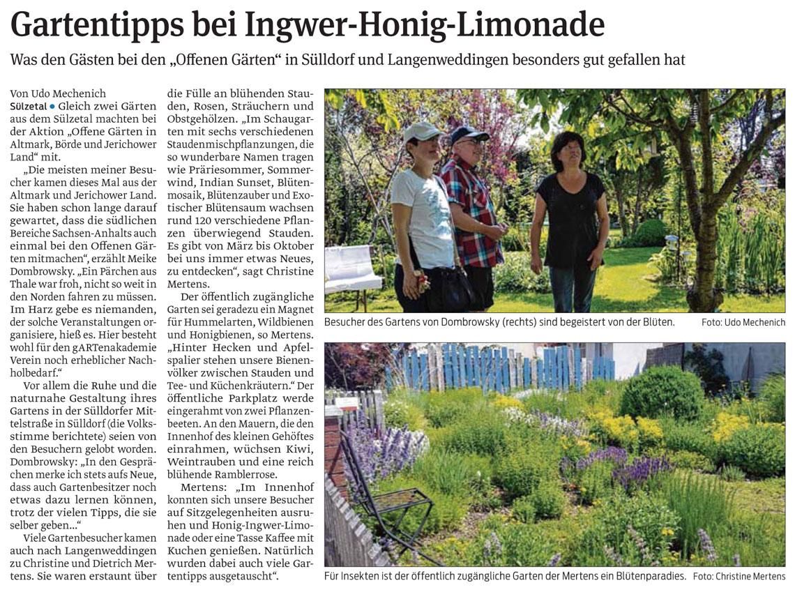 Gartentipps bei Ingwer-Honig-Limonade